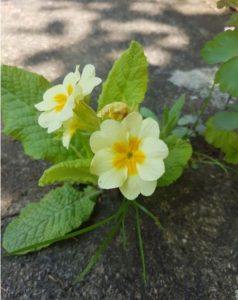 Handmade Knitted Primrose Plant Fitting in Knitting Children Quick Craft Ideas